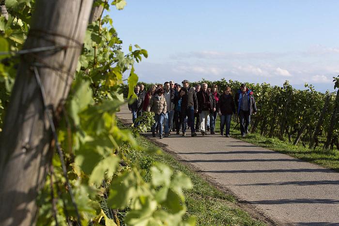 Wein, Reben, See und der Winzerverein