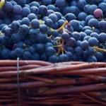 Weintrauben 900x640